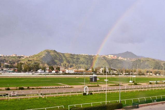 horserace_rainbow2014